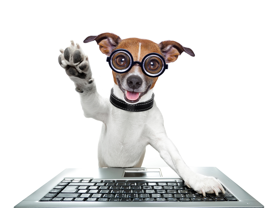 Silly Dog and  computer keyboard