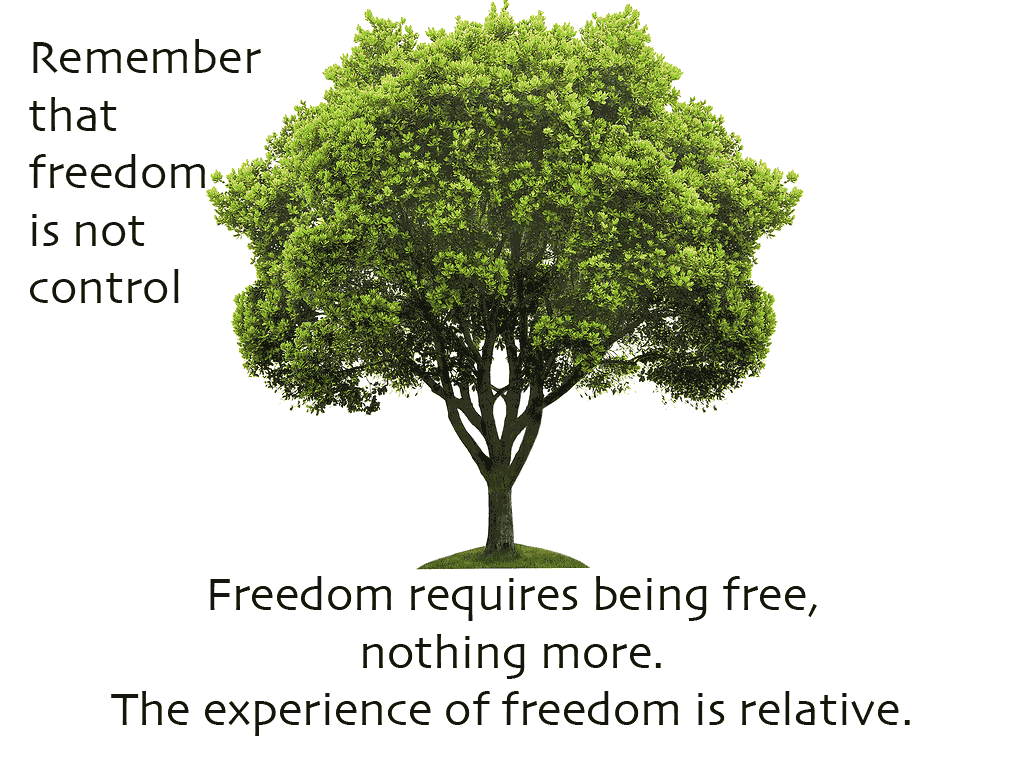 Freedom-Tree-20150729
